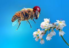 Protected bee (kunstschieter) Tags: flower macro insect helmet bee protection