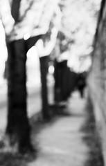 A glimpse of Paris (martina.stang) Tags: picturalism blackandwhite impressionistic person street montparnasse cemetery wall trees leadinglines hmbt bokeh blur paris