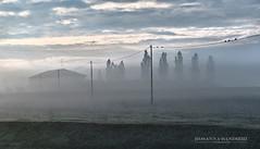 DSC_1677-copia (principessarosy) Tags: fog nebbia emilia correggio mattino picoftheday