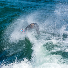 ArchitectGJA-4751.jpg (ArchitectGJA) Tags: lighthousepoint surfing californiababy hurley brogieambrogiopanesi coastlife ripcurl xcel lighthousefield california beach marineanimals coast cliffs wetsuit streetphotography waves surfingsteamerlane oneill santacruz steamerlane montereybay