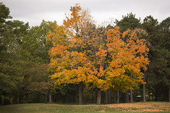 High Park - Fall Colours (cjb_photography) Tags: trees fall toronto torontolife torontophoto torontoclicks highpark colours tree season autumn foilage the6ix paths
