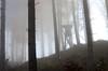 20161030-WOL_7739.jpg (viennalinux) Tags: spaziergang nebel herbst nature tauern fog natur ossiach ossiacher