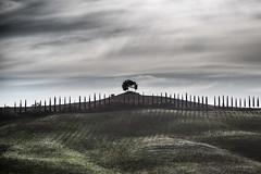 Tuscany III (alexanderkoch) Tags: siena tuscany outdoor landscape tree cloud acre baum wolken allee alley landschaft toskana italien italy cretesenesi