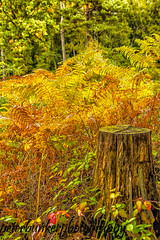 Trunk Call. (PJB32) Tags: autumn woodland burnhambeeches nature outdoor canon70d sigma1750