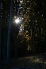 DSC_0310 (Pter_Szab) Tags: mtra matra hungary nature autumn colours mountains galyateto galyatet forest hiking nationalpark landscape