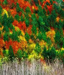 Fall Soon (BeNowMeHere) Tags: ifttt 500px trip autumn bolu color colorful colour colourful fall fallcolours fallsoon foliage landscape travel turkey yedigller