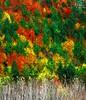 Fall Soon (BeNowMeHere) Tags: ifttt 500px trip autumn bolu color colorful colour colourful fall fallcolours fallsoon foliage landscape travel turkey yedigöller