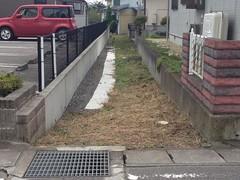 GREEN_NOGAMI_015 (yabuki-keikanWS) Tags: