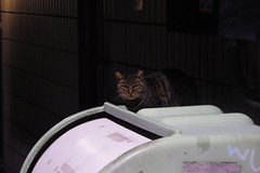 Today's Cat@2016-10-20 (masatsu) Tags: cat thebiggestgroupwithonlycats catspotting pentax mx1 osaka