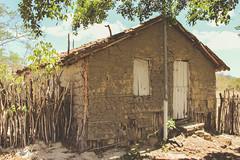 um (Andr Beni Mota) Tags: serrabrancapb serradojatob fazenda jatob rural caminhos do nordeste brasileiro ne caprinos taipa casadepauapique