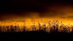 Savane (Matthieu Suc) Tags: d7100 1685mm paysage nuit ciel