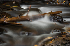 Slow Rapids (Claude Tomaro) Tags: rapid longexposure branch water rocks rock carbide mill ruins gatineau park canada quebec sony alpha a77ii brown fall leafs automn