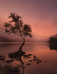 Iconic Dawn (Captain Nikon) Tags: iconic llynpadarn lonesometree lonetree snowdonia northwales lake dawn silhouette moody atmospheric beautiful mountains mist reflections nikond7000 sigma1020mmf4 famousviews tranquil serene wales explored explore