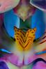 Orkide_1 (Kjell Marmlind) Tags: orkide blomma flower macro makro
