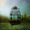 Bird cage (jaci XIII) Tags: gaiola paisagem pessoa landscape person cage