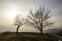 Tree lovers (Rianetna) Tags: treelovers twotrees treesonahill treesinfog