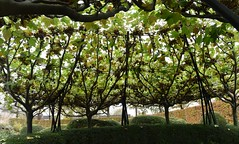 Platanen detail in de tuin van Museum de Buitenplaats te Eelde (Dr.) (Maarten Kroon @ shooting) Tags: buitenplaats drenthe holland tuin garden plataan thenetherlands flickrbestpics