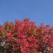 Tree in Target parking lot, Lynchburg, Virginia