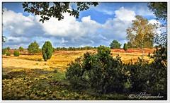 Die Quelle der Haverbeeke (Don111 Spangemacher) Tags: quelle heide heidekreis heideblüte herbst haverbeeke lüneburgerheide landschaft flus naturschutzgebiet niederhaverbeck niedersachsen