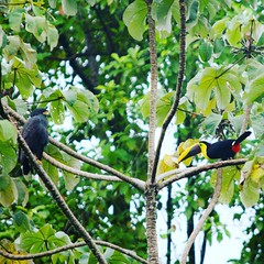 #birdwatching #birds in #paradise 😜 #costarica #puravida. #wellness #yoga #rainforest #sup #surfing #ocean #snorkeling #whale #hiking and more.