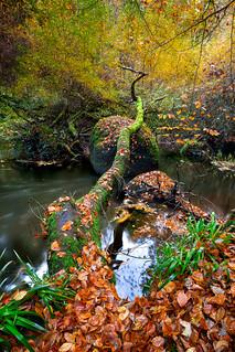 Rivière d'Argent -Huelgoat-