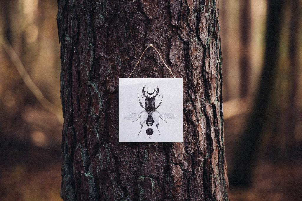 Lights In The Forest Jaminjan96 Tags Travel Adventure Explore Nike Lokai Fairy