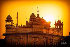 Gold Sunset (Riccardo Maria Mantero) Tags: riccardomariamantero amritsar temple gold sunset golden sikh
