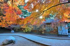 ~~ Maple (Shang-fu Dai) Tags:  taiwan nantou  formosa nikon d800 af20mmf28d     fushoushan farm  maple