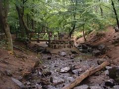 Pihenhely a Bene-pataknl (ossian71) Tags: magyarorszg hungary mtra mtrafred tjkp landscape termszet nature pihenhely rest erd forest