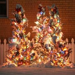 Snow covered and sparkly (rkramer62) Tags: rkramer62 christmaslights whitefence snowcovered evergreens december