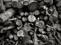NIK2734 (nikdanna) Tags: trunks firewoods trees blackandwhite pentax nikdanna