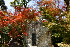 DSC02817 (MrSUIZOU) Tags: 京都 紅葉 北野天満宮 平野神社 十月桜