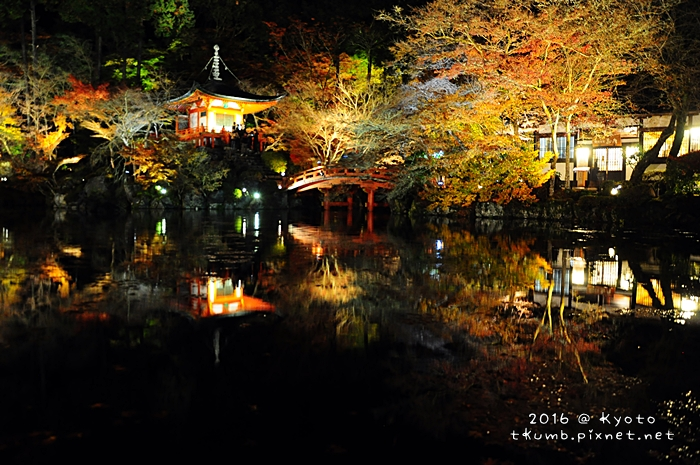 2016醍醐寺夜楓4.JPG