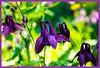 vida. (De carrusel) Tags: 2016 flores trenta tolmin eslovenia si
