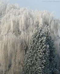 Tervuren.Belgium (Natali Antonovich) Tags: winter nature snow frost tervuren belgium belgie belgique