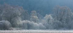 Icy morning (hgviola ♫) Tags: deutschland germany badenwürttemberg lauffen neckar neckarschlinge naturschutzgebiet feuchtgebiet icy frozen cold winter eisig kalt gefroren raureif hoarfrost wald forest bruchwald morgen morning advent hgviola fotografie hgviolafotografie nikon d750 tamron180mm naturereserve panorama
