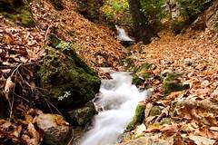 #autumn #nature_photography (salam.jana) Tags: autumn naturephotography