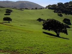 Natural Grass (robertobassu) Tags: nature landscape landscapes trees tree trip travel trekking forest foresta natura panorama light love green