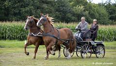 Chevaux de trait attels CORLAY (claude 22) Tags: caballo cheval brittany bretagne breizh concours cavalli cavallo cavalo chevaux paard paarden corlay attelage  chevauxdetrait