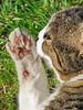 IMG_1307 (d_fust) Tags: cat kitten gato katze 猫 macska gatto pauline fust kedi 貓 anak katt gatito kissa kätzchen gattino kucing 小貓 고양이 katje кот γάτα γατάκι แมว yavrusu 仔猫 का बिल्ली बच्चा
