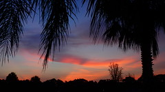 Sunrise 9/9/2015 (Jim Mullhaupt) Tags: pictures camera morning pink blue red wallpaper sky orange sun color tree weather silhouette yellow clouds sunrise landscape photography dawn photo nikon flickr florida snapshot picture palm exotic p900 tropical coolpix bradenton sunup cloudsstormssunsetssunrises nikoncoolpixp900 coolpixp900 nikonp900 jimmullhaupt