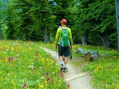7-091 (Gnarlene) Tags: flower hiking banff healypass monarchramparts