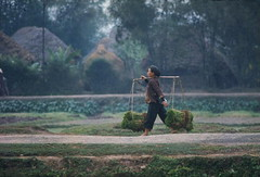 5572720 (thanhtan327) Tags: woman vietnamese rice grain vietnam farms balance produce poles shoots agriculture across agricultural carrying dikes timeincnotown namdinh 5572720