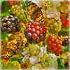 Late Summer Delights (virtually_supine) Tags: painterly collage photomanipulation bright butterflies textures montage layers colourful blackberries digitalmanipulation digitalartwork watercoloureffect photoshopelements9 kreativepeopletreatthis98 sourceimageautumnfruitsfortreatthisbylemon~art
