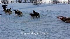 Tromso dog sledding (novarex1) Tags: dog snow norway video sledding sleds tromso hurtigruten