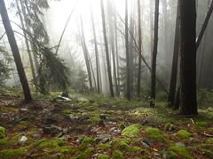 Brixen Umgebung (inge.sader) Tags: fog nebel herbst wald trentino sdtirol altoadige brixen bressanone tils eisacktal