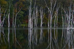 Beauty from Floods and Ashes (SunnyDazzled) Tags: statepark longexposure autumn lake tree fall water forest reflections evening newjersey bare reservoir autumnleaves trunks current deadtrees longpondironworks