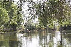 Reflecting (Pamela Saunders) Tags: travel lake bench relax flood exploreusa