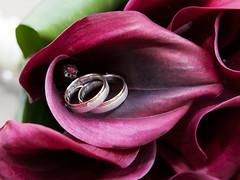 Foto 88 (paulina.brambora) Tags: wedding flower rot calla outdoor blumen florist callas forever blume liebe ehe strauss ringe straus eheringe immer ewig frimmer gebunden weinrot verheiratet drausen