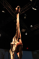 Science World - October 15, 2015 (rieserrano) Tags: giraffe bodyworlds plastination